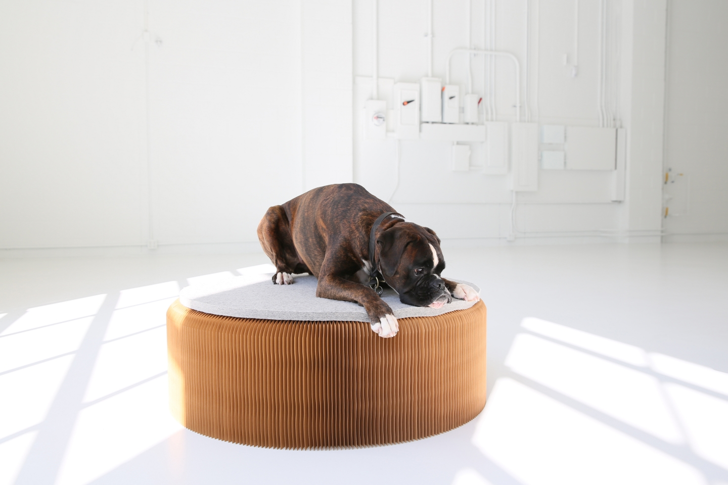 a Boxer puppy uses a wool felt pad as a dog bed. The pad tops a softseating fanning stool.