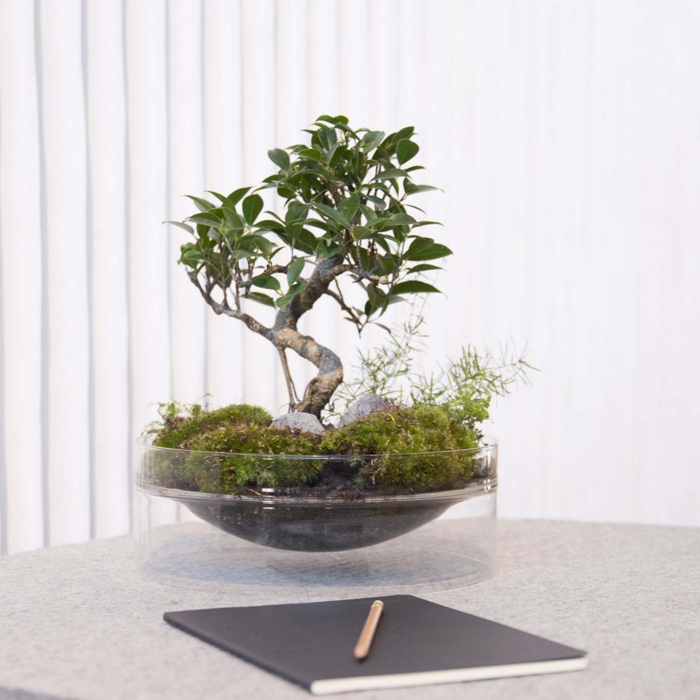 bonsai tree in a floating glass vase.