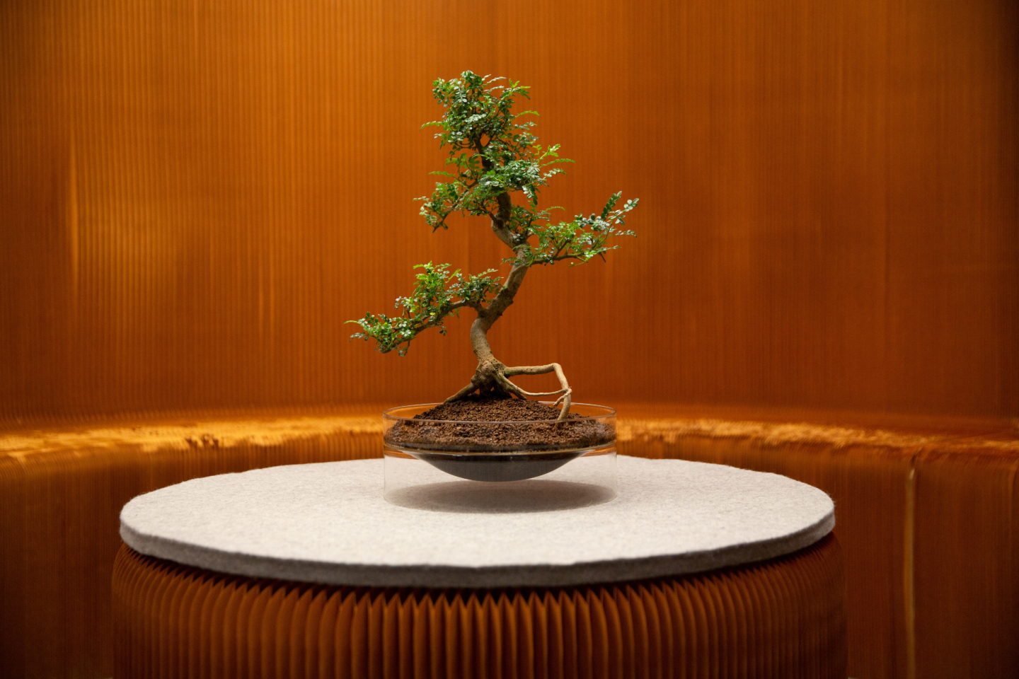 bonsai float glassware paper furniture molo